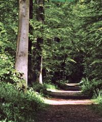 Wald im Emsland